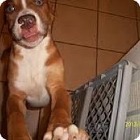 Adopt A Pet :: Skinny - Justin, TX
