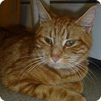 Adopt A Pet :: Estelle - Hamburg, NY