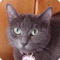 Domestic Shorthair Cat for adoption in Mountain Center, California - Nataila