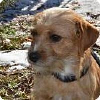Adopt A Pet :: Foxy - Marlton, NJ