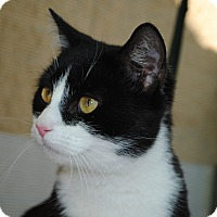 Adopt A Pet :: Webster - Palmdale, CA