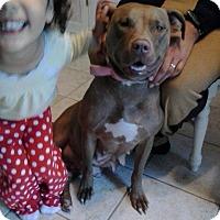 Adopt A Pet :: Liza - Jacksonville, NC