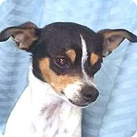 Adopt A Pet :: Katie - San Francisco, CA
