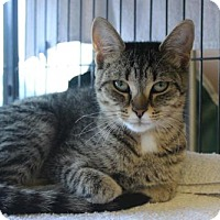 Adopt A Pet :: Tina - Hamilton, ON