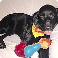 Adopt A Pet :: Squirt - BIRMINGHAM, AL