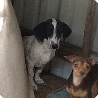 Adopt A Pet :: Frack - springtown, TX