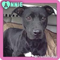 Adopt A Pet :: Annie meet me 12/4 - Manchester, CT