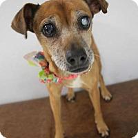 Adopt A Pet :: Eva/ Matilda - Yukon, OK