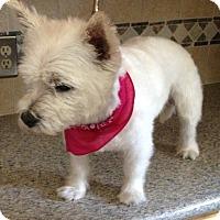 Adopt A Pet :: EMMA-ADOPTED - Carrollton, TX