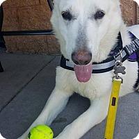 Adopt A Pet :: Nikki ~ Sweet Senior!Foster or adopter needed ASAP - Caldwell, NJ