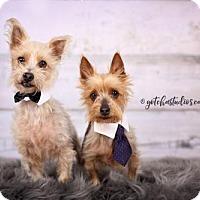 Adopt A Pet :: Benji 3353 - Toronto, ON