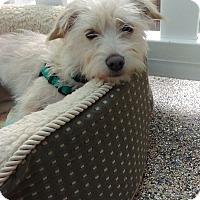 Adopt A Pet :: Cassidy - Thousand Oaks, CA