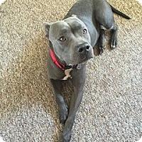 Adopt A Pet :: Namiko aka Libby - Gainesville, FL