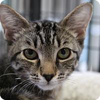 Adopt A Pet :: Prudence - Sarasota, FL