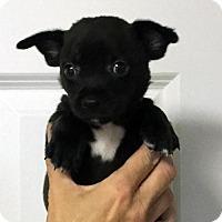 Adopt A Pet :: Nate - Danbury, CT