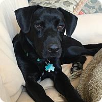 Adopt A Pet :: Benson - Alpharetta, GA