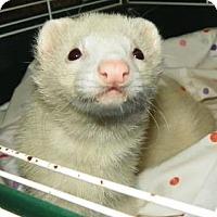 Adopt A Pet :: Exodia - Lowell, MA