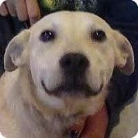 Adopt A Pet :: Henry - Orlando, FL