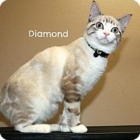 Adopt A Pet :: Diamond - Idaho Falls, ID