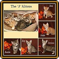Adopt A Pet :: Jake Jax Janie Jenna & Joy - Marietta, OH