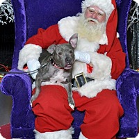 Adopt A Pet :: Mary - Akron, OH