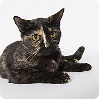 Adopt A Pet :: Calista - Tomball, TX