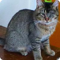 Adopt A Pet :: Jazzy - Buhl, ID