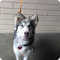 Adopt A Pet :: I1266594 - Pomona, CA