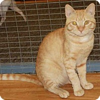 Adopt A Pet :: O''MALLEY* - Hanford, CA
