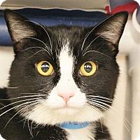 Adopt A Pet :: Mason - North Las Vegas, NV