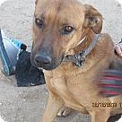 Adopt A Pet :: Ally