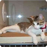 Adopt A Pet :: Sweet Pea - Secaucus, NJ