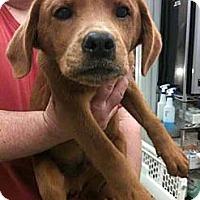 Adopt A Pet :: Cuatro - Southampton, PA