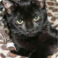 Adopt A Pet :: Jolie - Arlington, VA