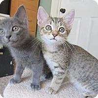 Adopt A Pet :: Bree, Bitsy & Bosco - Arlington, VA