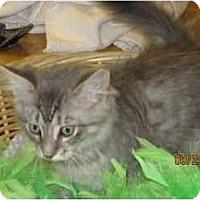 Adopt A Pet :: Harry - Catasauqua, PA
