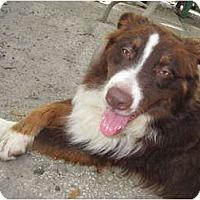 Adopt A Pet :: Dash - Nokomis, FL
