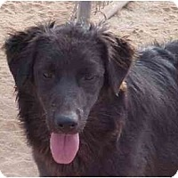 Adopt A Pet :: Sharlee - Scottsdale, AZ