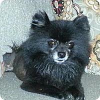 Adopt A Pet :: Angel - Lexington, TN
