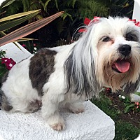 Adopt A Pet :: SKYE - Los Angeles, CA