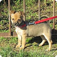 Adopt A Pet :: PIPPA - Hartford, CT