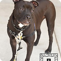 Adopt A Pet :: Ranger - Fredericksburg, VA