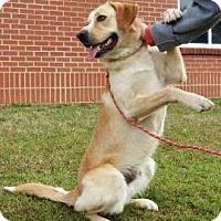 Adopt A Pet :: Jimmy - Lincolnton, NC