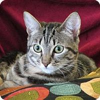 Adopt A Pet :: Rose - Walnut Creek, CA