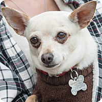 Adopt A Pet :: Stellie - San Marcos, CA