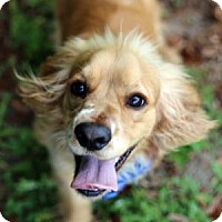 Adopt A Pet :: Apollo - Lakeland, FL