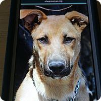 Adopt A Pet :: BARNEY VON BARDULF - Los Angeles, CA