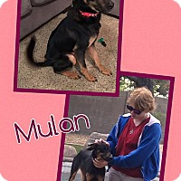 Adopt A Pet :: Mulan - Scottsdale, AZ