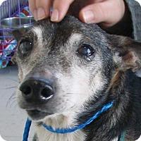 Adopt A Pet :: Buck - Erwin, TN