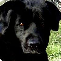 Adopt A Pet :: JACKSON(GORGEOUS!! WOW! - Wakefield, RI